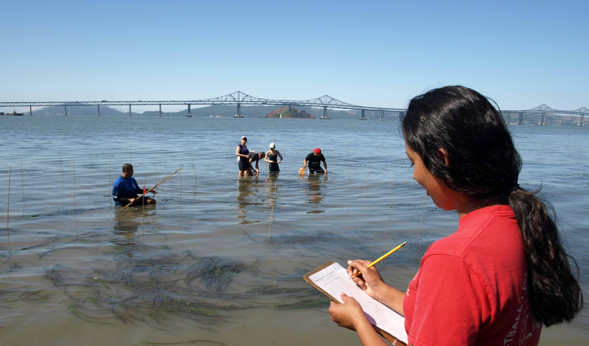 With the Richmond Bridge in the background, a female student in a red T-shirt documents observations on a clipboard while a group of five student researchers wade hip-deep in the bay